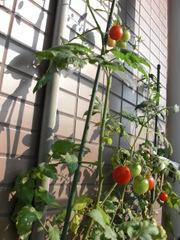 Tomato0712